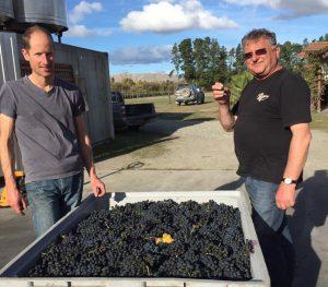 2016 grapes